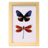Print in frame - Libelle & vlinder 30x20 cm