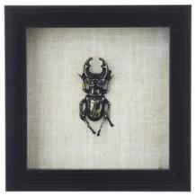 Fotolijst met insect, Kever, Zwart, 155x155x35