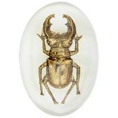 Papiergewicht met gouden insect