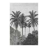 Fotobehang palmen (dessin 89434)