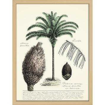 Print in lijst 30x40 Palmboom