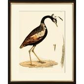 Print in lijst 40x50 Kuif vogel