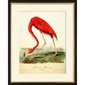Print in lijst 40x50 Flamingo