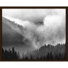 Print in lijst mistig woud 40x50