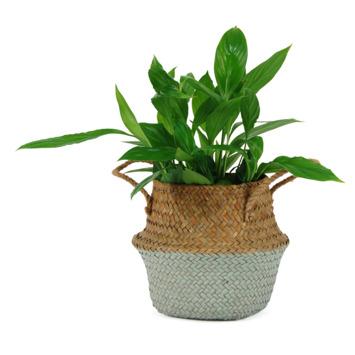 Rieten Manden Voor Planten.Plantenmand Nina Gras Met Groene Onderkant 16x13 Cm