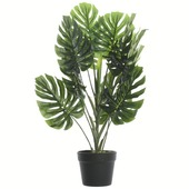 Plant monstera in plastic pot 80x55x55 cm