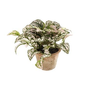 Kunstplant Hypoestes  25 cm in pot