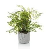 Kunstplant Fern adianthum 30 cm in pot