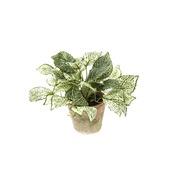 Kunstplant Fittonia  25 cm in pot