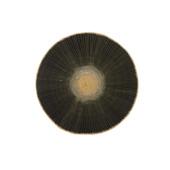 Placemat zwart 38 cm