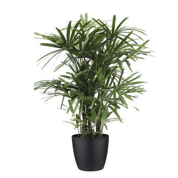 Stokpalm (Rhapis palm) met Elho Bloempot Brussels Zwart
