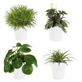 Combibox – Pannenkoekplant, Peperomia, Chlorofyrum, Senecio met bloempot wit