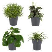 Combibox – Pannenkoekplant, Peperomia, Chlorofyrum, Senecio met bloempot grijs