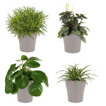 Combibox – Pannenkoekplant, Peperomia, Chlorofyrum, Senecio met bloempot Antraciet