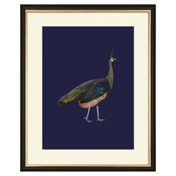 Lijst Profiel 4 Dier-vogel 1
