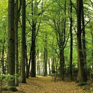 Fotobehang woods (dessin 89234)