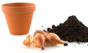 /advies/tuin/bloembollen-poten