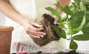 /advies/tuin/kuipplanten-onderhouden